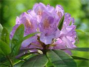 Kategorie pflanzen blumen pflanzenversand blumenfotos